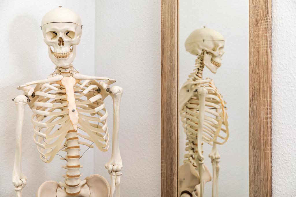 Skelett Praxis Osteopathie Lohenstein